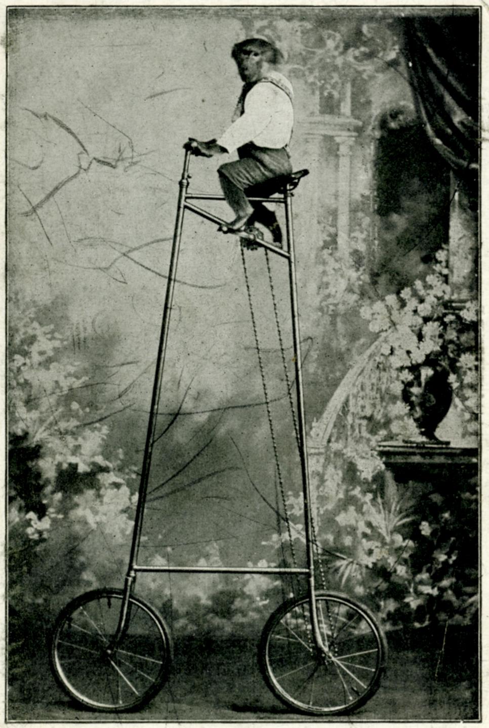monkey-ape-tallbike-bikekitchen-vienna-radpropaganda