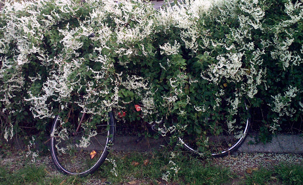 fahrrad-altona-radpropaganda