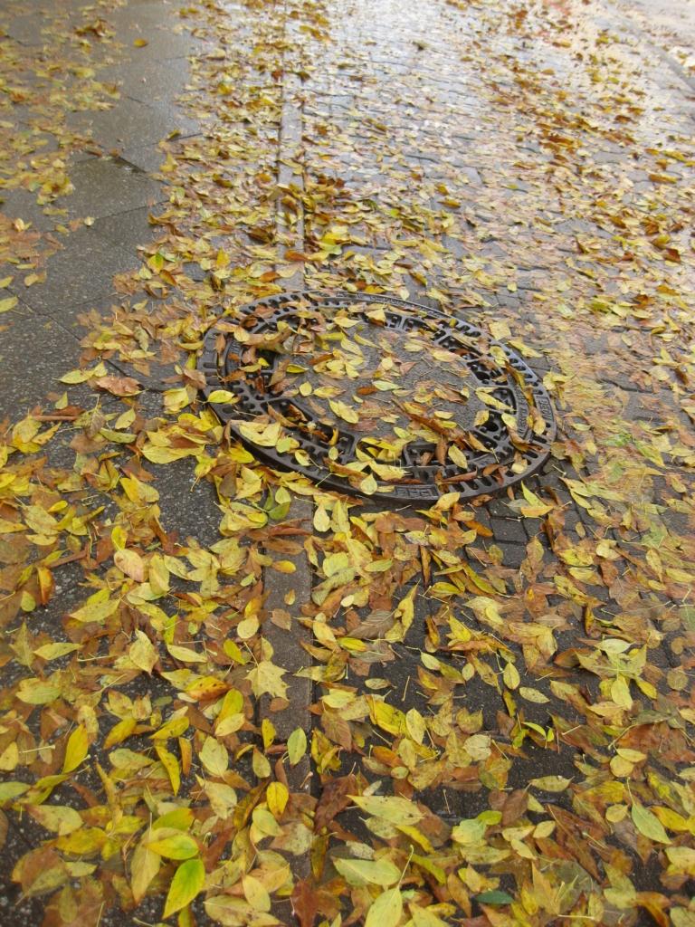 Herbst Berlin Radweg Struggle